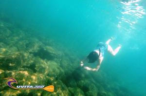 uvita-tree-sixty-costa-rica-snorkel-surf-sup-kayak-adventure-snorkel-ocean-osa-ballena-surfing-tour
