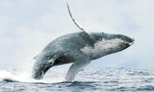 uvita 360 green paradise whale watching