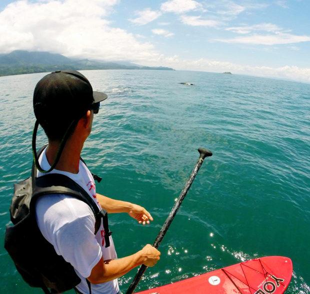 paddle-with-whales-erick-zamora-uvita-360-uvita-whales