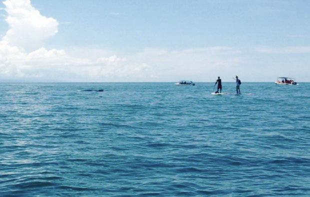 paddle-with-whales-uvita-360-uvita-whales