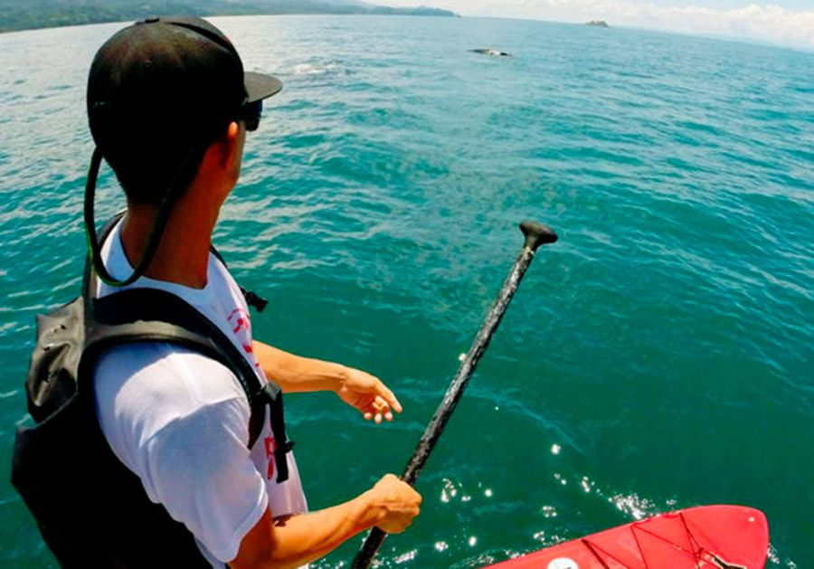 Whale's Watching in Uvita, Costa Rica it's a must!