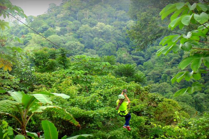 Rainforest Zipline